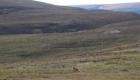 chasse aux cerfs en ecosse