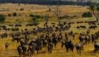 migration gnous safari photos