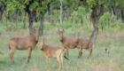 safari chasse benin