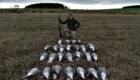 chasse aux oies en ecosse